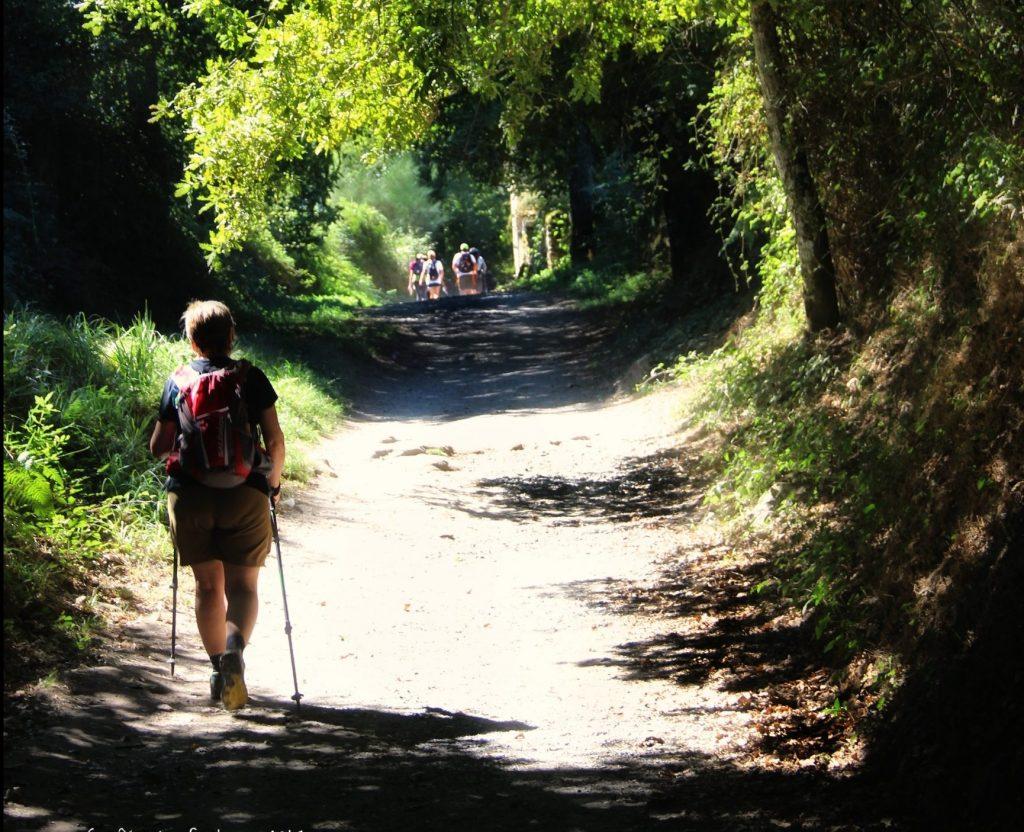 Compostela camino